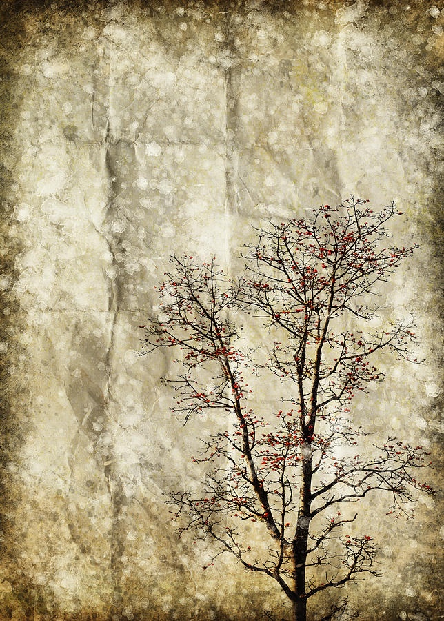 Tree On Old Grunge Paper Photograph