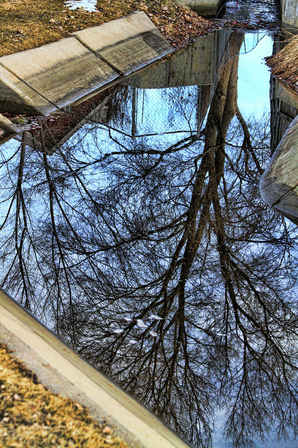 Tree Reflection From No Where Photography Image Photograph