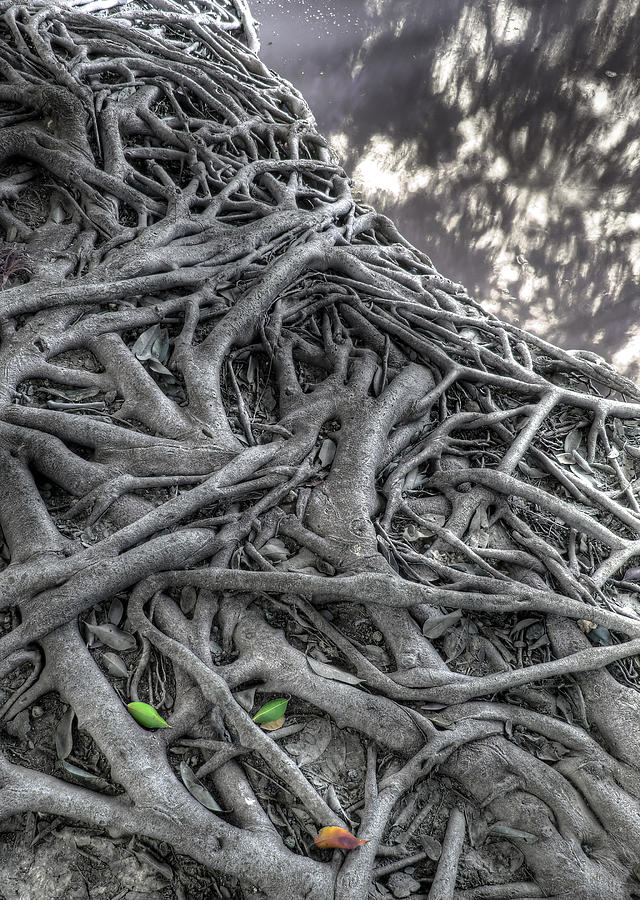 Agriculture Photograph - Tree Roots by Natthawut Punyosaeng