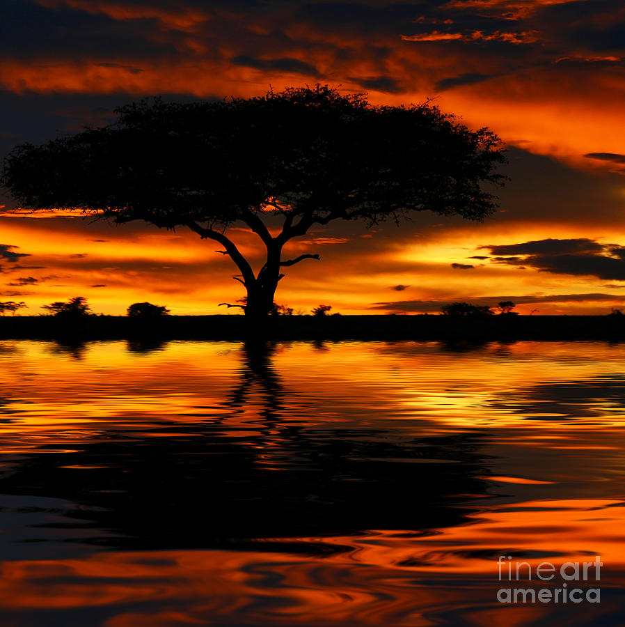 Tree Silhouette And Dramatic Sunset Photograph