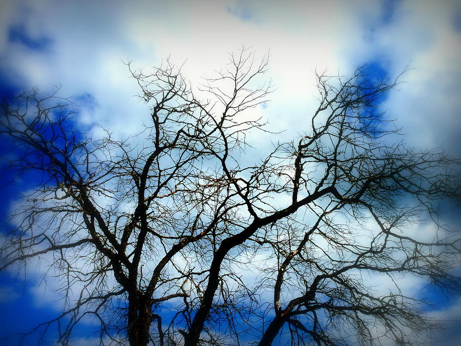 Tree Silhouette Blue Photograph  - Tree Silhouette Blue Fine Art Print