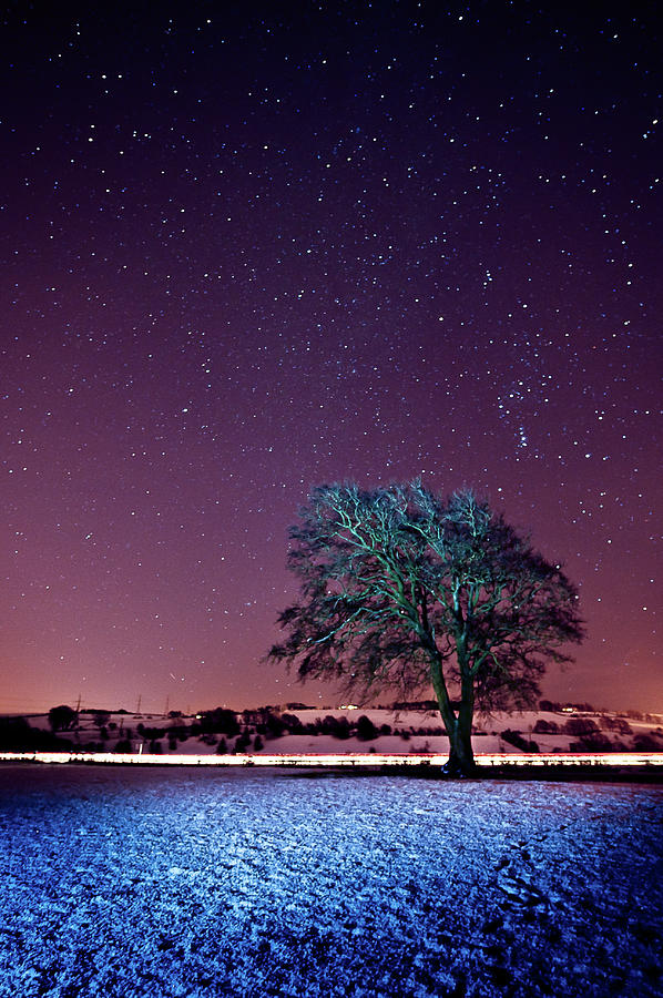 Tree Snow And Stars Photograph