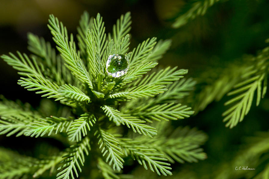 Tree Top Dew Drop Photograph  - Tree Top Dew Drop Fine Art Print
