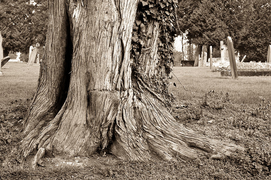 Tree Trunk Photograph  - Tree Trunk Fine Art Print