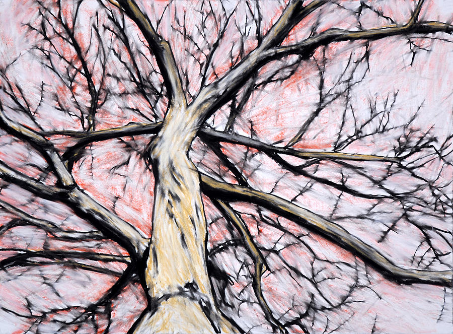 Tree With Red Sky Drawing