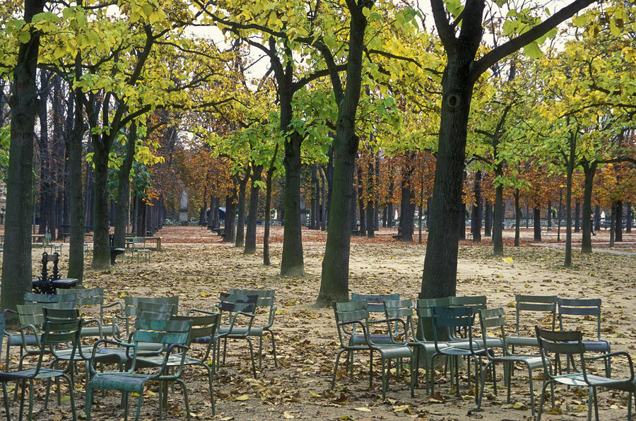 Trees And Empty Chairs In Autumn Photograph  - Trees And Empty Chairs In Autumn Fine Art Print