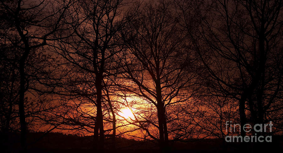 Trees At Sunset Photograph