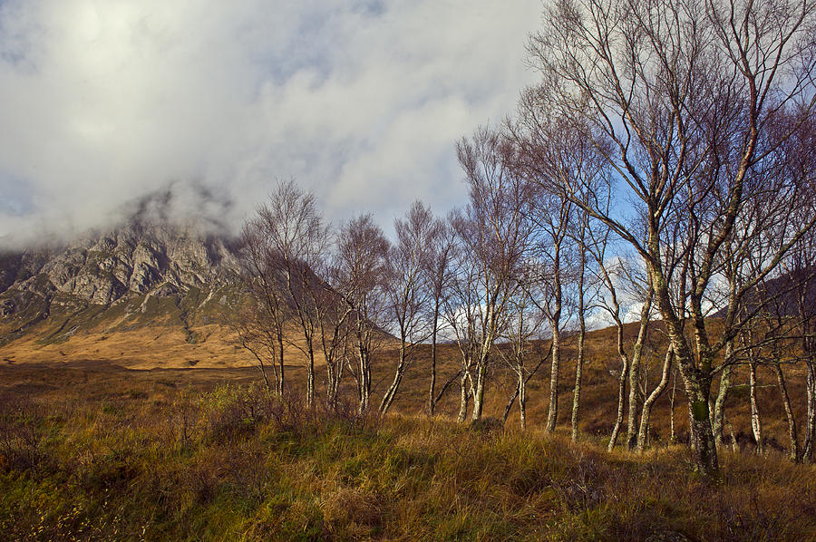 Trees Below Stob Dearg Photograph  - Trees Below Stob Dearg Fine Art Print