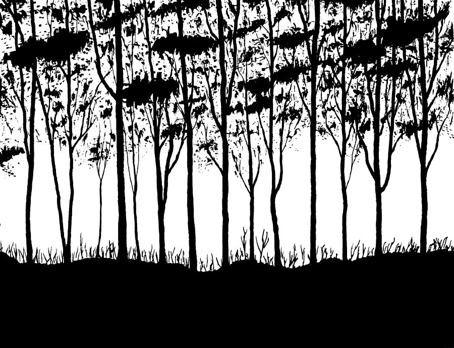 Trees Curtain  Drawing  - Trees Curtain  Fine Art Print