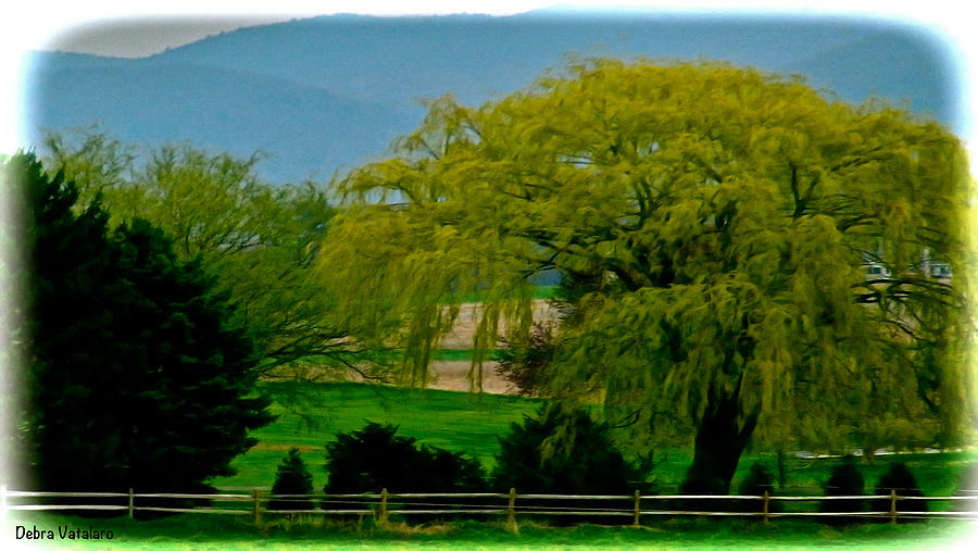 Springtime Landscape Photograph - Trees Gulp In The Color by Debra     Vatalaro