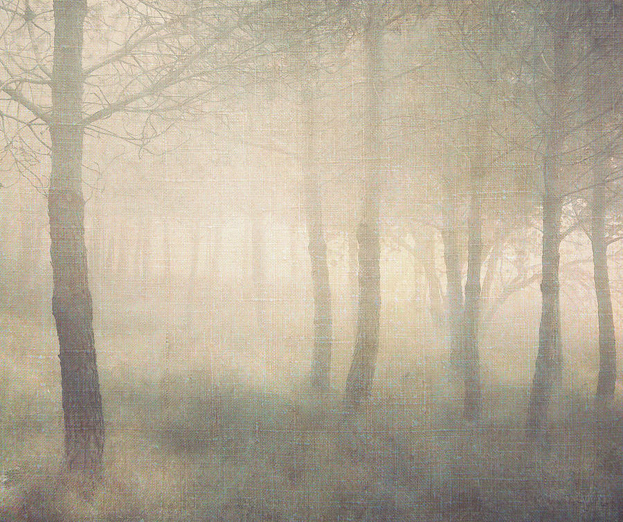 Trees In Mist On Linen Photograph  - Trees In Mist On Linen Fine Art Print