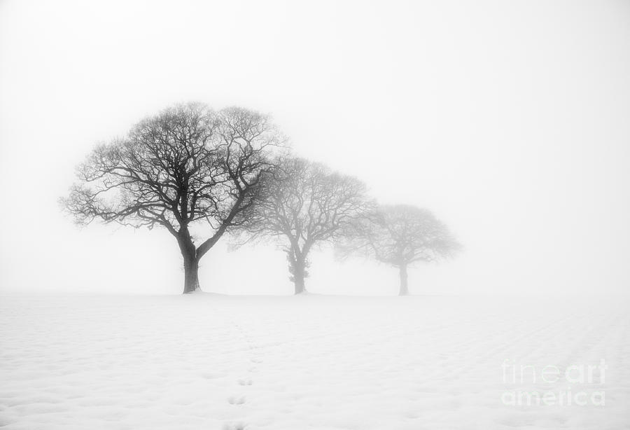 Trees In The Mist Kingthorpe Photograph