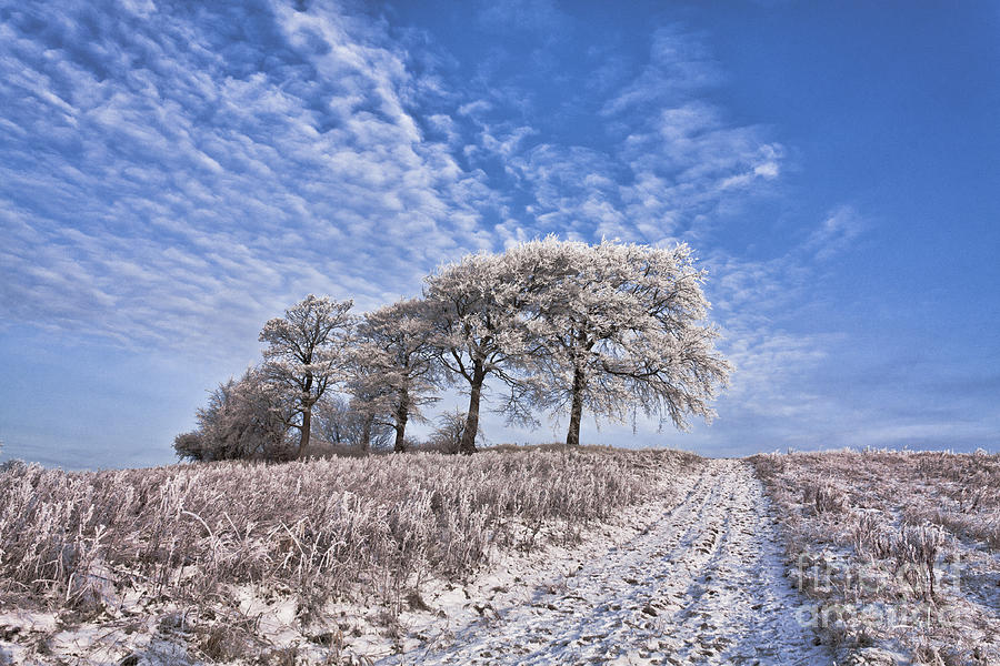 south Lanarkshire Newton winter Scene Cold Trees Winding Pat Photograph - Trees In The Snow by John Farnan