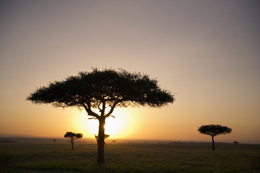 Trees On The Savannah With The Sun Photograph  - Trees On The Savannah With The Sun Fine Art Print
