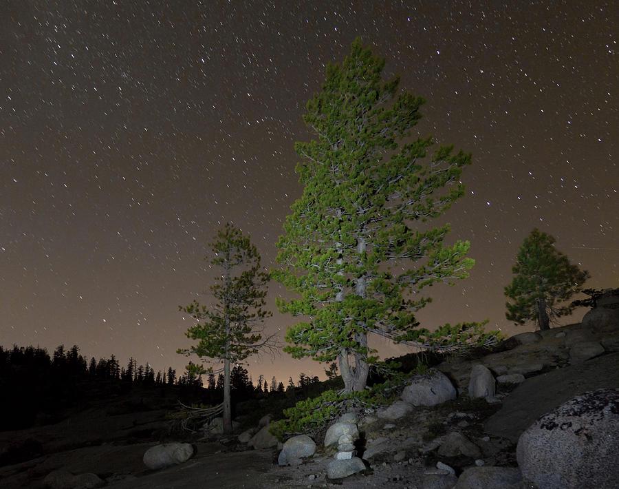 Horizontal Photograph - Trees Under Stars by Sean Duan