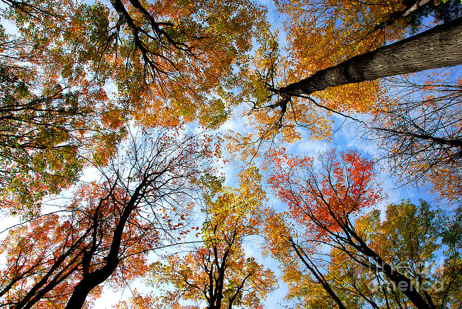 Fall Photograph - Treetops by Elena Elisseeva