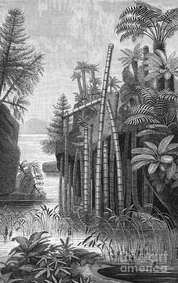 Triassic Period Photograph