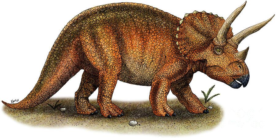 les Tricératops