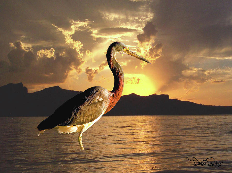 Tricolored Heron At Sunset Digital Art  - Tricolored Heron At Sunset Fine Art Print