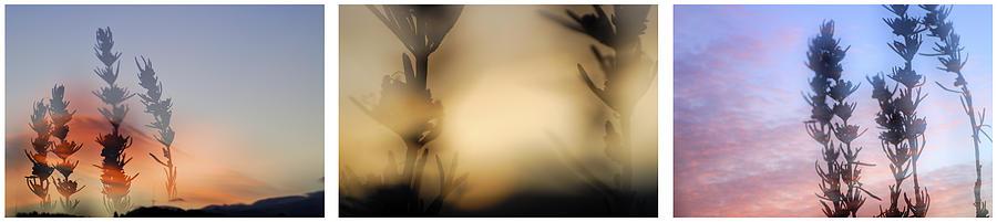 Triptico Romero Photograph