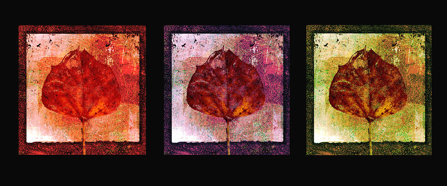 Triptych Leaves  Mixed Media  - Triptych Leaves  Fine Art Print
