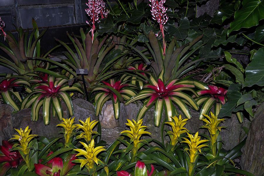 Flowers Photograph - Tropical 1 by Wanda J King