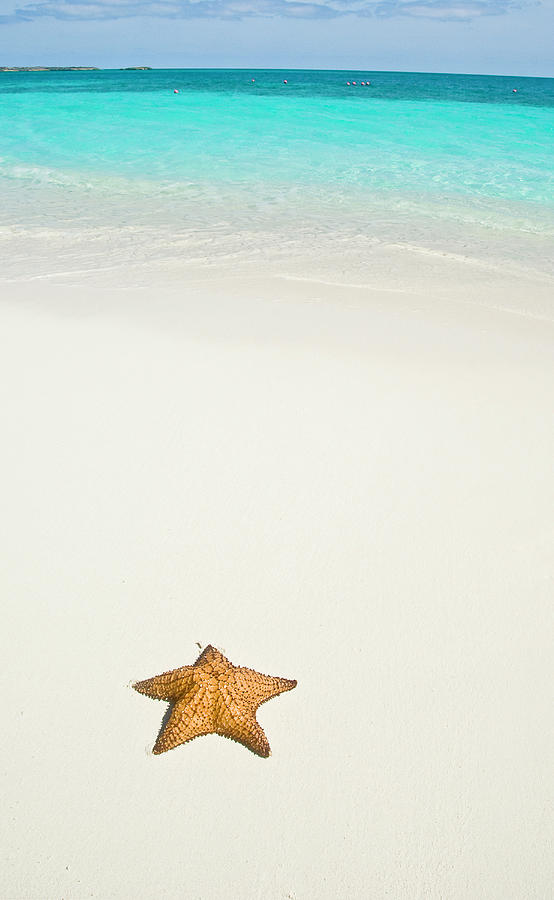 Vertical Photograph - Tropical Beach And Starfish by Mehmed Zelkovic
