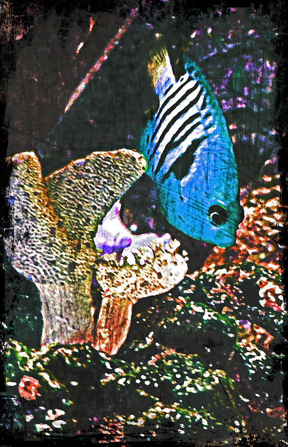 Tropical Fish Digital Art  - Tropical Fish Fine Art Print