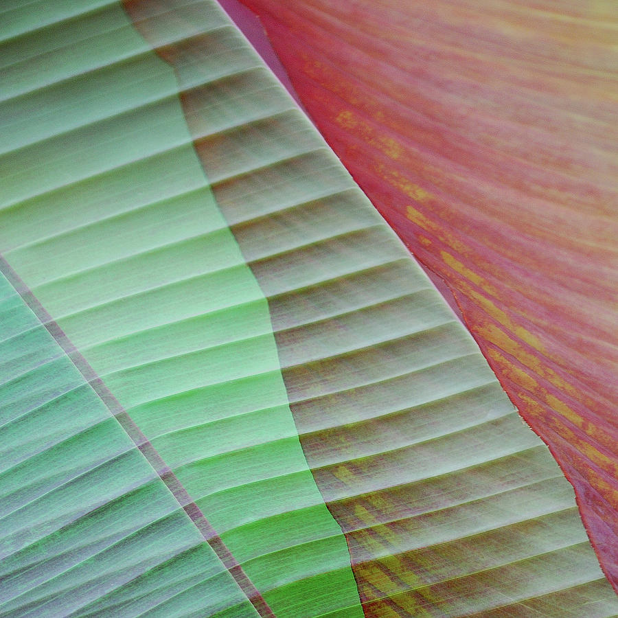 Tropical Leaves No 8  2009 Photograph