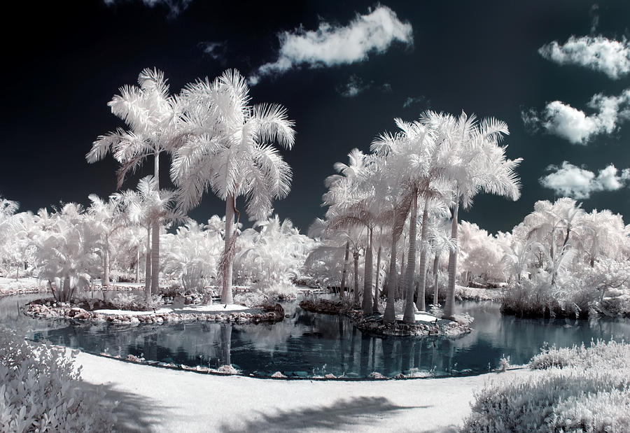 Tropical Paradise Infrared Photograph  - Tropical Paradise Infrared Fine Art Print