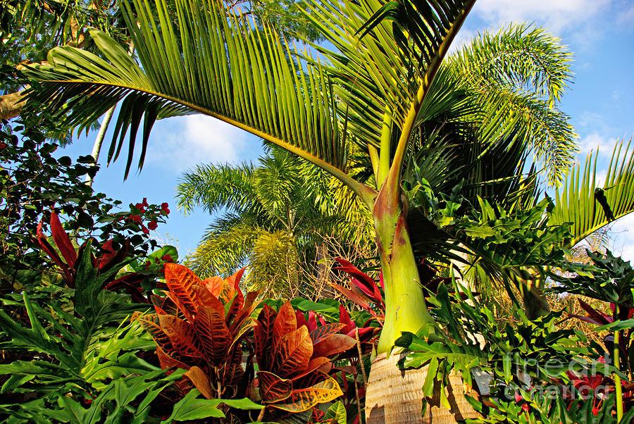 Tropical plants photograph