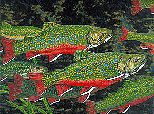 Trout Art Brook Trout Fish Artwork Giclee Wildlife Underwater Painting