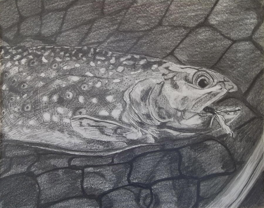Trout In Net Drawing
