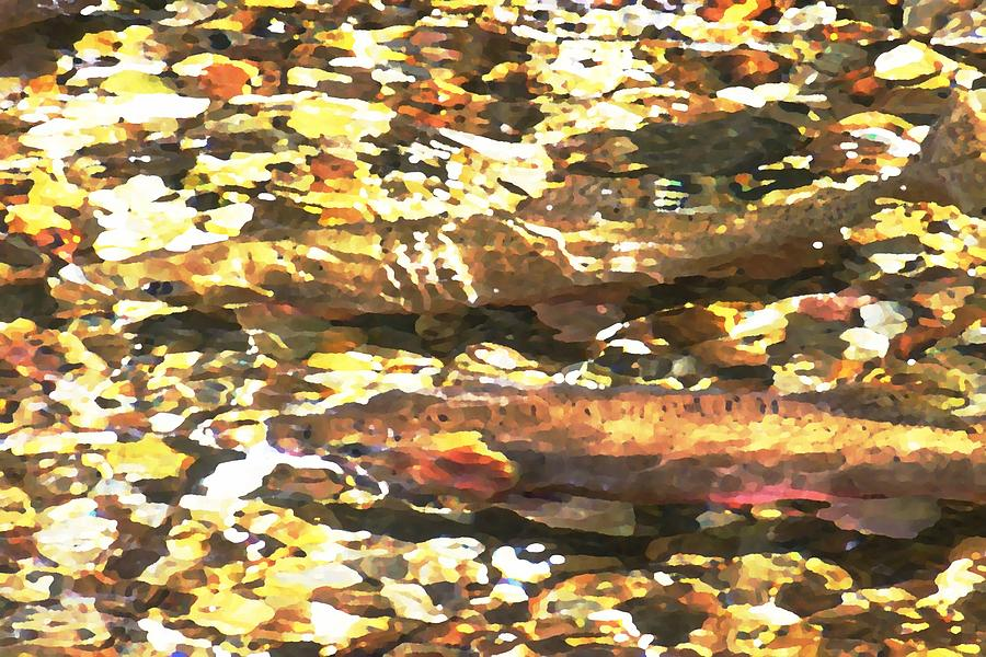 Trout Stream Photograph  - Trout Stream Fine Art Print