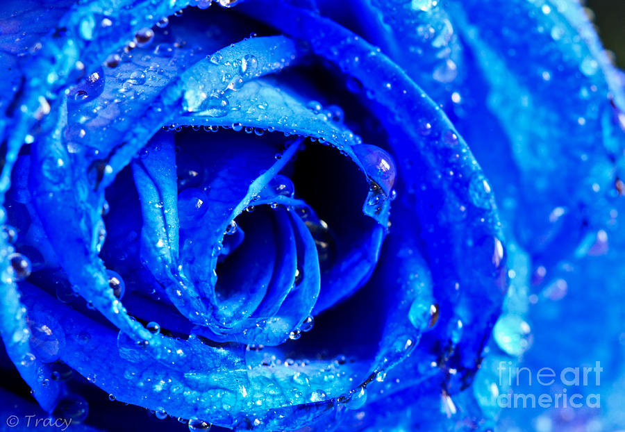 True Blue Photograph