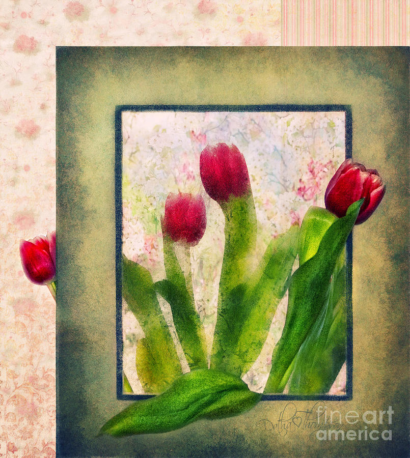 Tulip Art Photograph  - Tulip Art Fine Art Print