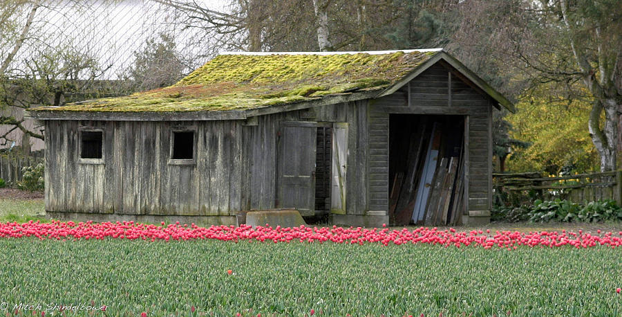Tulip Barn Photograph