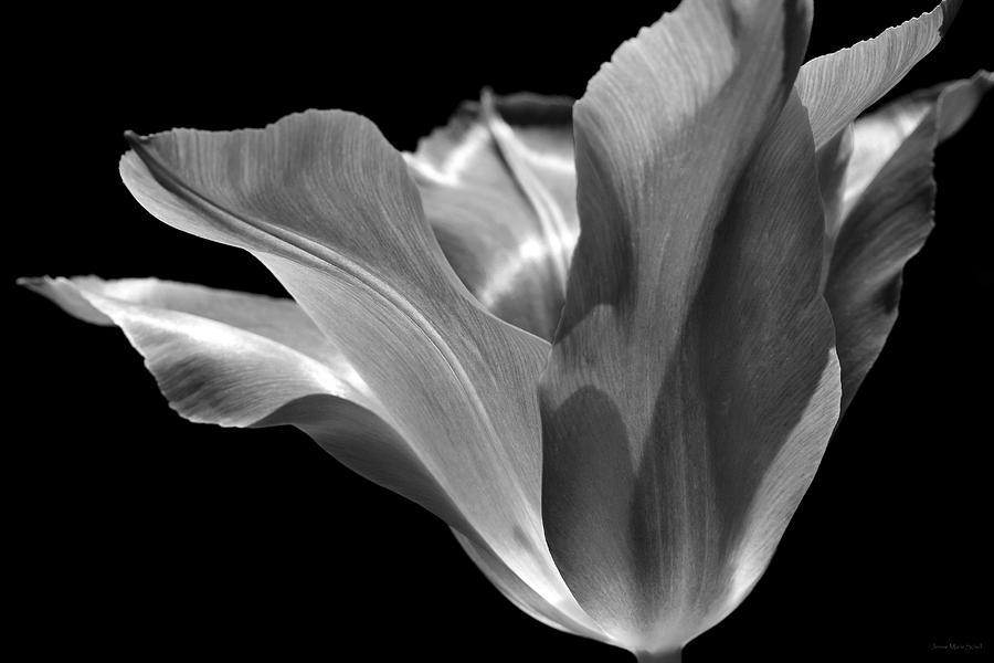 Flower Art Black And White Black And White Tulip Flowers