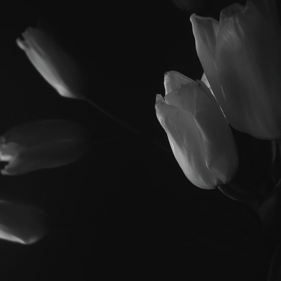Tulip Service Photograph