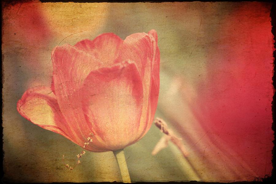Tulip Photograph - Tulip Tendrils by Toni Hopper