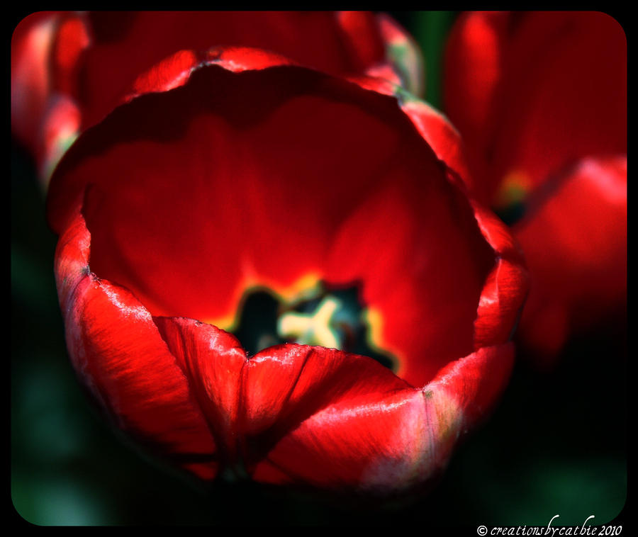 Tulips Of Love Photograph  - Tulips Of Love Fine Art Print