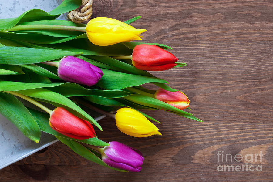 Tulips On The Table Photograph