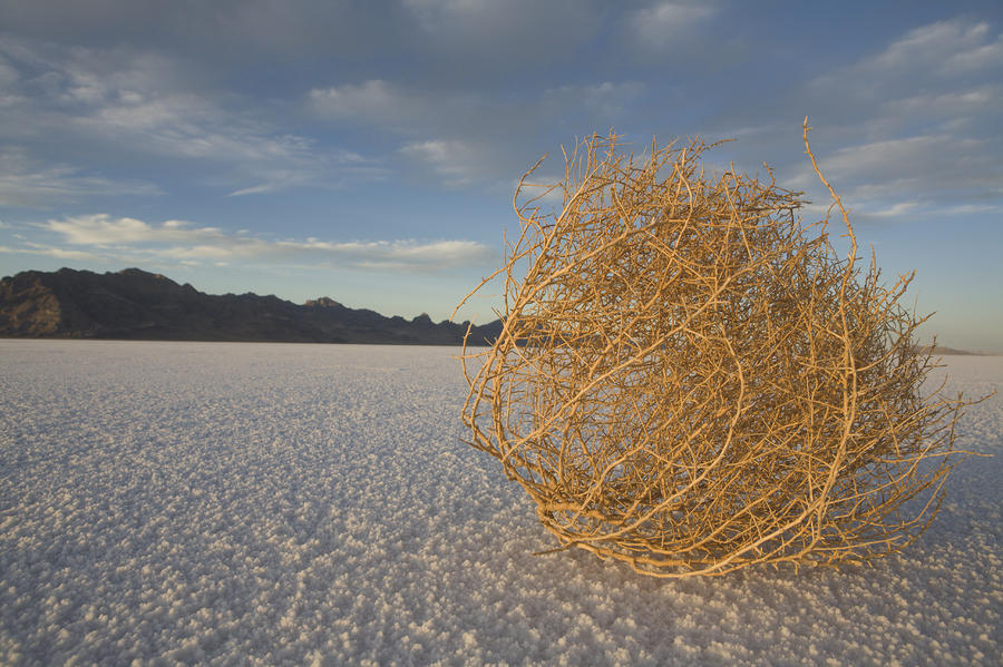 tumbleweed-on-the-bonneville-salt-john-burcham.jpg