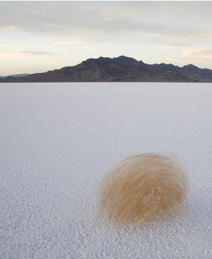 Tumbleweed Spinning Over The Bonneville Photograph  - Tumbleweed Spinning Over The Bonneville Fine Art Print