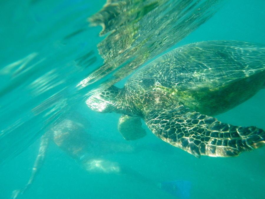 Turtle Photograph - Turtle 8 by Erika Swartzkopf