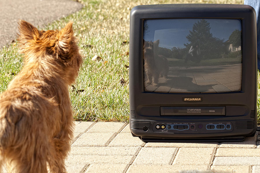 Angel And Tv Digital Art - Tv Watching Dog by Susan Stone