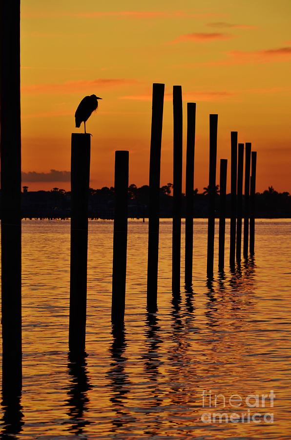 Twelve Poles At Sunset Photograph