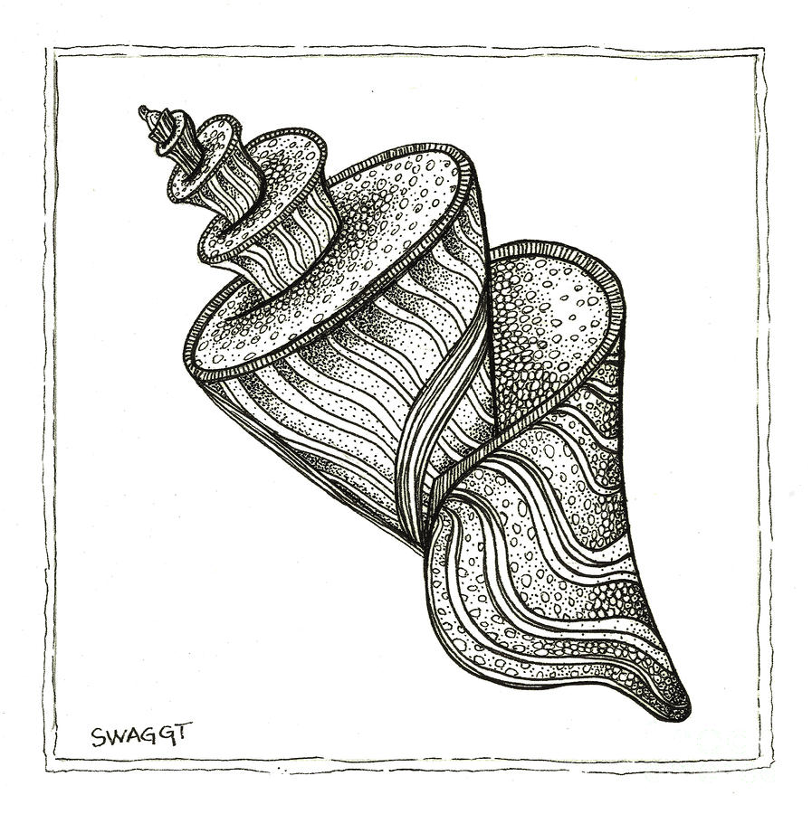 Twirly Shell Drawing  - Twirly Shell Fine Art Print