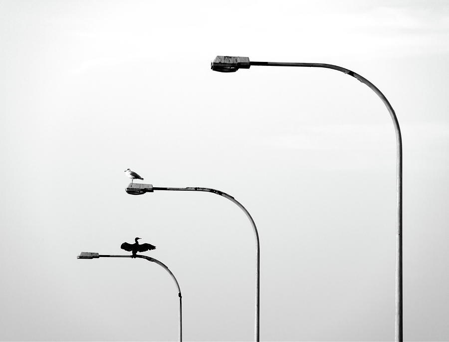 two birds sitting on street lamps photograph. Black Bedroom Furniture Sets. Home Design Ideas