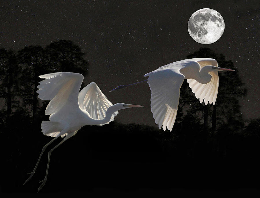Two Great Egrets  Mixed Media